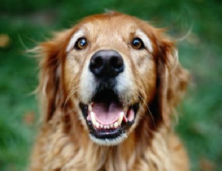 VeterinarySpecialistReferrals